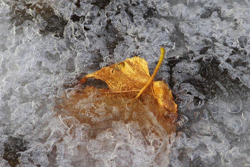 kylmunud.jpg