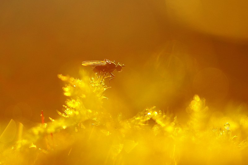 kuldne4.jpg