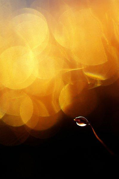 kuldne1.jpg