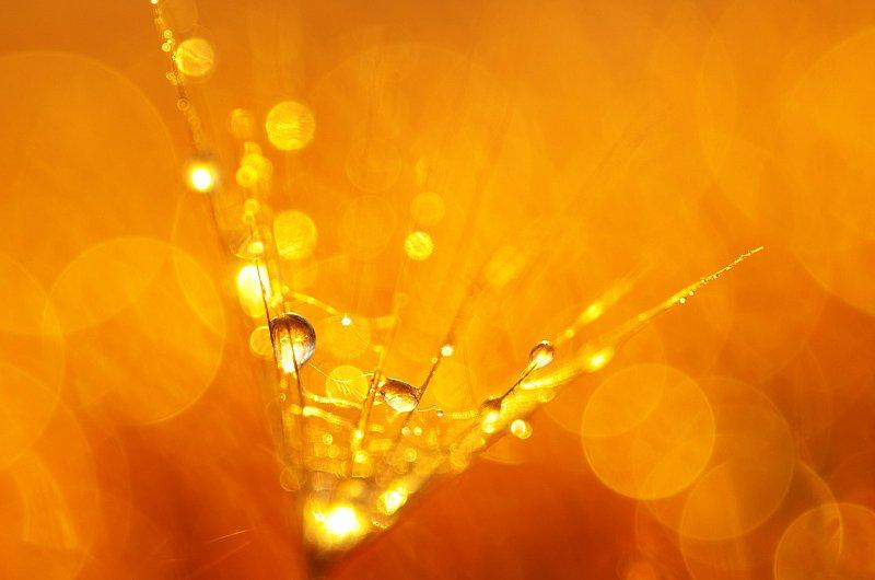 kuldne-2.jpg