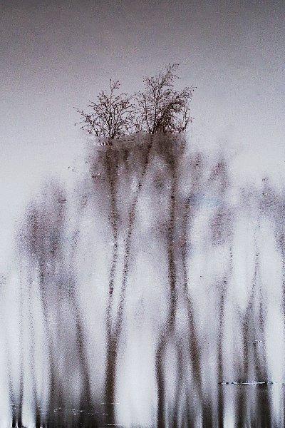 puud-2.jpg