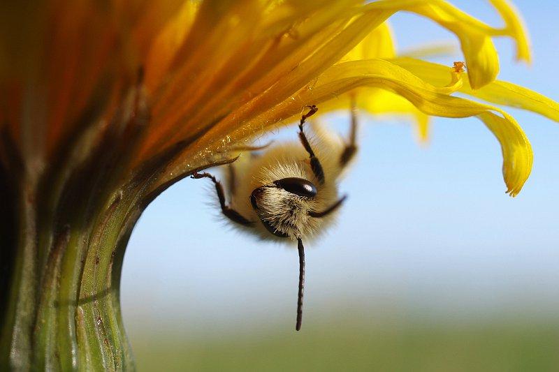 mesilane.jpg