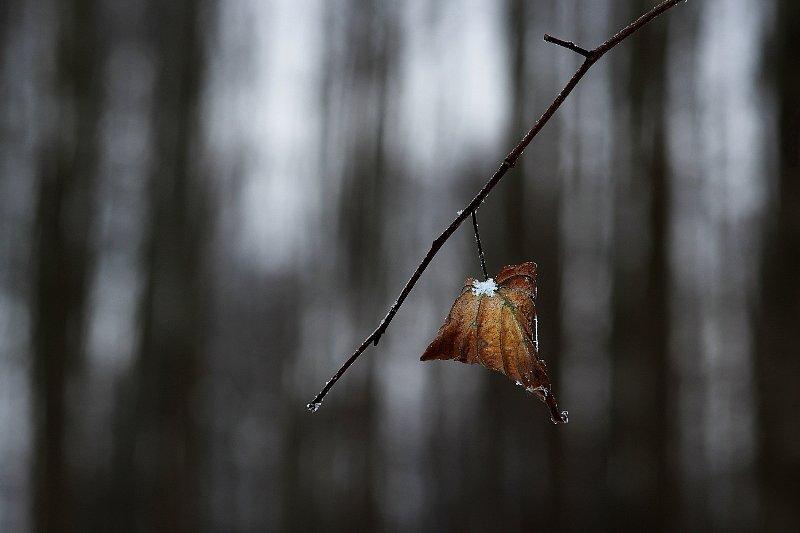 talvineleht.jpg