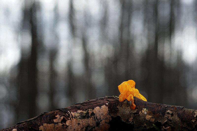 kollanekohrik2.jpg